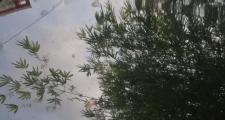 奥迪q5l,车子停在树下结果滴了可能是树胶的东西咋清洗洗了好几次都洗不掉